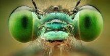 makrobug / küçük hayvanların büyütülmüş hali