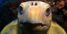 animal relationships / hayvanlar, hayvan ilişkileri, duygu ifadeleri