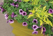 Container Gardening Recipes / Colourful ideas for your #hangingbaskets, or #pots on the #patio or out front. Create your own or use our formulas!