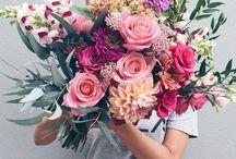 Flowers. Succulents.
