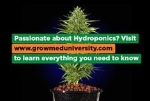 Grow Med University / Visit us at www.growmeduniversity.com to become an epic grower!