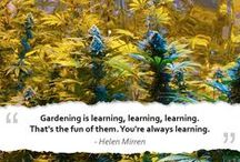 Quotes about growing
