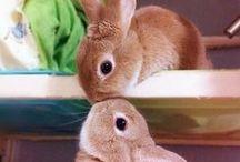 bunny + rabbit / by Leda C