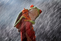 Rain / by Michael White