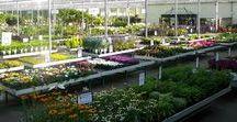 Tuincentrum / Plantencentrum-boomkwekerij Maréchal bestaat uit 20 hectare boomkwekerij en 15.000 m2 plantencentrum. Voor de particuliere verkoop van tuinplanten hebben wij 10.000 m2 overdekte serre en een buitenafdeling van 5.000 m2 ter beschikking. De overzichtelijke indeling, de brede paden, de grote winkelkarren, het uitgebreide assortiment en de grote hoeveelheden geven u de kans om snel en handig te winkelen en alles te vinden. Neem zeker ook een kijkje op onze website www.marechal.be