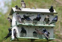 Casitas para pájaros / by Maricarmen Aparicio Maceiras