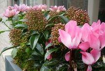 ideetjes najaarsbloembakken / Deze planten zijn ideaal om uw potten en bloembakken op te fleuren in het najaar. Deze late bloeiers of deze planten met een opvallend blad of bes geven kleur aan je terras of balkon.