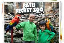 Batu Secret Zoo  / Januari 2014
