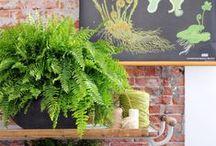 Woonplant van de maand / Met de actie 'Woonplant van de maand' zet VLAM (B) en 'Mooi wat planten doen' (NL) en  het brede assortiment van kamerplanten in de kijker. Elke maand wordt hier een andere kamerplant voorgesteld.