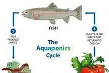 Aquaponics - Hydropic