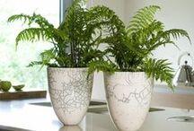 Kamerplanten / Wij houden van 'GROEN', of dit nu binnen of buiten is. Laten we jullie alvast inspireren met deze kamerplanten. Voor elk plekje is er wel een geschikte plant te vinden...