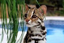 my future cat