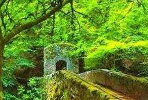 Bridges through trees...