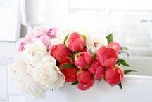 Florals / by Liz Adams // Sequins & Stripes