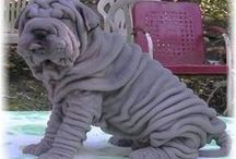 Shar Pei Harley / My son, Harley wants this dog when he moves out (he's 17 ) His favorite color is the black ones. / by Bobbie Jo Clark-Cotton