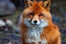 cute animals / by Kimberly Seman