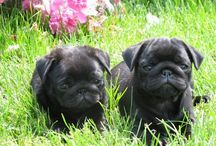 Pugs Not Drugs / by Marie