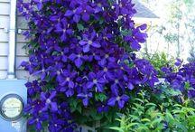 Gardening - Flowers  Galore