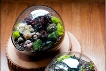 Terrariums / by Flower & the Song