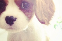 And They Call it Puppy Love / Huge eyes, floppy ears, chubby paws...what's not to love about puppies?