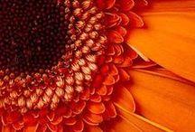 Beautiful Orange ... / by Bonnie Lowman