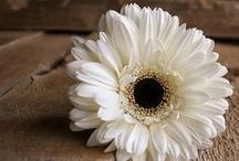 Brown and White ... / by Bonnie Lowman