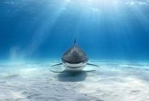 Magnificent Underwater Creatures