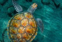 Photographs of Sea Turtles