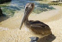Cayman Islands / Enjoying the Island Life !! / by Loretta Westin