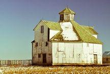 Barn Board / by Loretta Westin