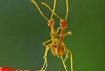 """""""The Ugly Bug Ball"""" / by Loretta Westin"""