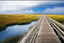 Cape Cod, My Home / The marshes, the sandy beaches, the ospreys, herons and rosa rugosa... I'll always be a Cape Cod girl, a milliner with the sand between her toes!