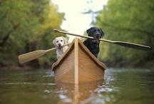 TheBlackLabILove / For the love of Black Labradors <3