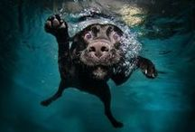 Dogs Swimming / A photographer that went underwater to capture the beauty in the dogs world.