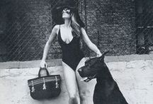 Celebrity Dogs / These dogs are stylish, well-groomed and famous.