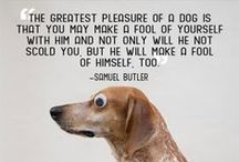 Dog Quotes / These quotes make you realize the importance of having your dog by your side.