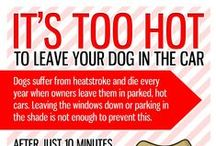 Dog Health and Safety / Keep your dog healthy and safe with these pinned tips!