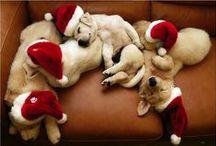 Holiday Dog Sightings  / These dogs are enjoying the holidays!