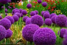 Garden & Flowers / by Delia Cañadilla Perales