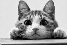 ❤️ Kitty