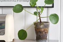 Indoor plants I love