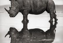 Rhino: Entrepreneur Symbol / Why this symbol?  Give your feedback!