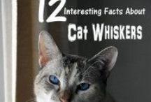 Savvy Pet Care Blog Posts