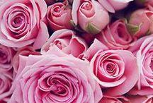 ✿ ʚིϊɞྀ ♥ Rose ♥ ʚིϊɞྀ ✿