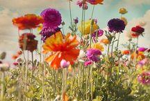 Flowers / Flowers - shapes & colours