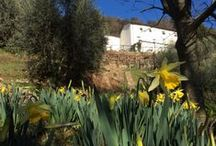 Organic Agriturism / organic farm in the hills of Lucca. surrounded by olive trees and woods. Apartment and rooms B & b