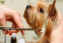 DIY Dog Grooming Tips + Ideas / DIY Dog Grooming Tips + Bath Ideas | Want the scoop on the latest DIY dog grooming trends and bath ideas? A little pet maintenance can go a long way. Discover tips and ideas for keeping your animal companion happy and healthy. SHOP dog nail clippers, de-shedding tools for dogs, oatmeal dog shampoo, dog ear cleaner, and tear stain remover for dogs http://amzn.to/1UrgrDH