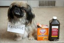 Pet Odor Eliminator | Out Of Carpet Cleaning Products | Dog Smell Remover Out of House | Animals / Pet Odor Eliminator Out Of Carpet Cleaning Products | Dog Smell Remover Out of House + Furniture | How to Get Rid of Dog Smells | Animals | OmegaPet all-natural Pet Stain and Odor Remover is multi-purpose cleaner can be used on carpet and upholstery, hardwood floors, dog beds, litter boxes, crates, and even laundry. It is formulated to eat away at odor-causing bacteria caused by urine, vomit, and other organic odors and stains. SHOP at Amazon http://amzn.to/1URv2rH