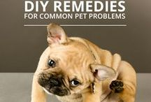 Natural Dog Home Remedies / DIY Natural Dog Home Remedies | Animals | Discover tips and articles of pet home remedies from the comfort of your home. Did you know that essential oils & apple cider vinegar are used as repellent for flies on dogs? Learn how to treat some conditions like ear infections and skin inflammation that might plague your dog. SHOP natural home remedies for you cats and dogs at Amazon.com/OmegaPet