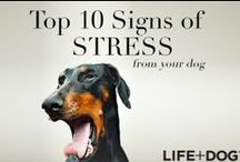 Dog Health Tips|Warning Signs / Like humans, dogs also need a healthy environment and fun activities to help them live more healthy and have long life. You are in a right board. This community shares tips to help them gain extraordinary health.